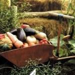 Un informe más de la ONU que llama a respaldar la agricultura campesina y la agroecología: ahora es tiempo para la acción
