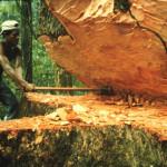 Parar la deforestación disminuiría emisión de CO2 en una quinta parte