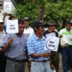 México: miel contaminada con transgénicos perjudica a productores