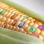 Greenpeace denuncia una amplia presencia de maíz transgénico ilegal en China