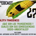 Desarrollo de cultivos transgénicos pone en riesgo al pueblo chino