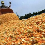 El Ministerio de Agricultura de China acusado de complicidad con Monsanto