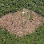 Desarrollismo brasileño extermina usos sociales del bosque y aguas amazónicas