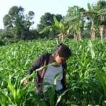 Guatemala: El acceso de las mujeres a la tierra