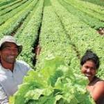 La agricultura campesina en la construcción de un paradigma poscapitalista