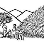 México: los hombres mesoamericanos no son de maíz transgénico