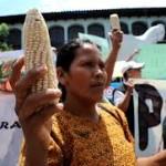 """Guatemala: La ley para la """"protección de obtenciones"""" vegetales, es entregar la vida y futuro de las generaciones venideras a las transnacionales"""