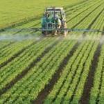 Paraguay: Poblado campesino casi desaparece por fumigaciones y soja