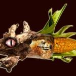 Crece conciencia sobre peligros de los cultivos transgénicos