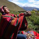 PERU: Aprueban reglamento que impide ingreso de transgénicos durante 10 años