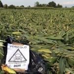 """Herbicida glifosato de Monsanto """"probablemente carcinógeno"""" para humanos"""", dice IARC"""