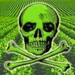Anulan autorización a Monsanto para cultivar soya transgénica en Yucatán