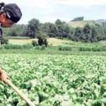 La agroecología es la solución al hambre y al cambio climático